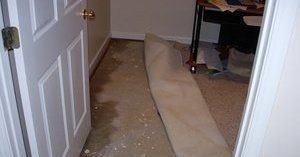 Mold After A Flood In Residential Property