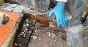 Water Damage Technicians Removing Moldy Debris