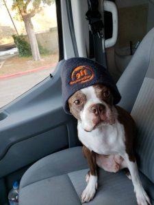 911-restoration-dog-ready-to-woof